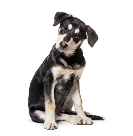 intrigued Crossbreed dog looking at the camera Stockfoto