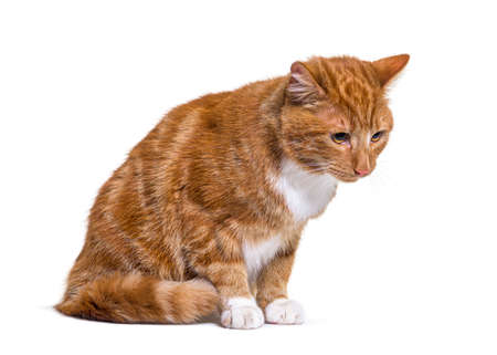 Depressive Ginger cat looking down, isolated
