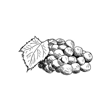 Grape cluster with grape leaf Vintage Hand Drawn Sketch illustration