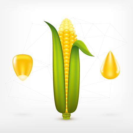 the kernel: fresh ripe corn cob with kernel and corn oil drop icons