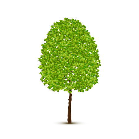 Vector fresh green deciduous abstract tree illustration