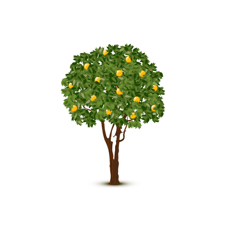 A Vector orange tree on white background.