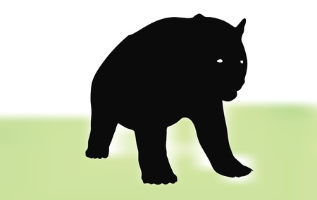 Bear walking in front of white background on grass Stock Vector - 18586813