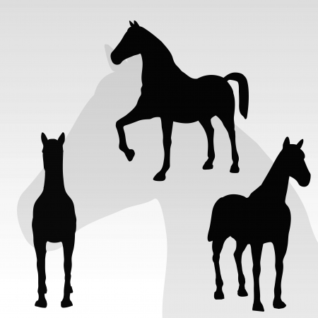 horse portrait standing against white background Stock Photo - 18989860