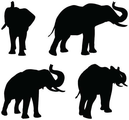 Eps 10 Set of editable vector silhouettes of African elephants in trumpet poses Illustration