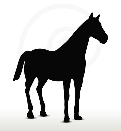 nag:  horse silhouette in standing still position