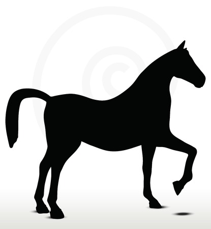 delineation: horse silhouette in Show Horse position