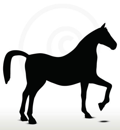silueta masculina: silueta del caballo en posici�n Mostrar Horse Vectores