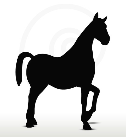 nag: EPS 10 Vector - horse silhouette in Show Horse position Illustration