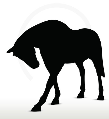 filly:  horse silhouette in standing still position