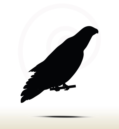 goshawk: illustration of eagle silhouette isolated on white background Illustration