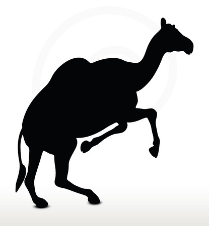 backlit: Image - camel in Running pose  isolated on white background
