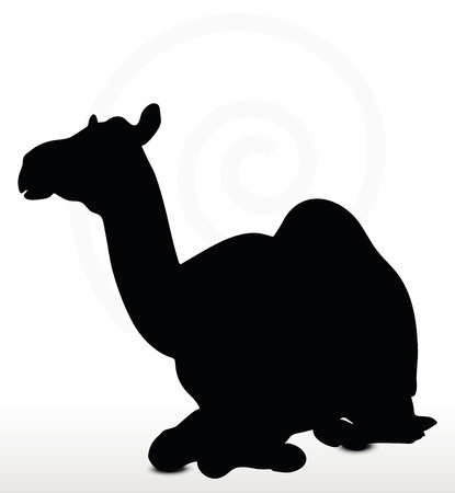 amimal: Image - camel in Sitting pose  isolated on white background