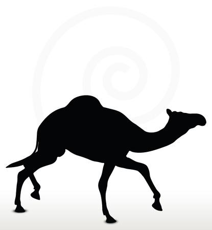 trotando: Imagen - camello en el trotar plantean aislados sobre fondo blanco