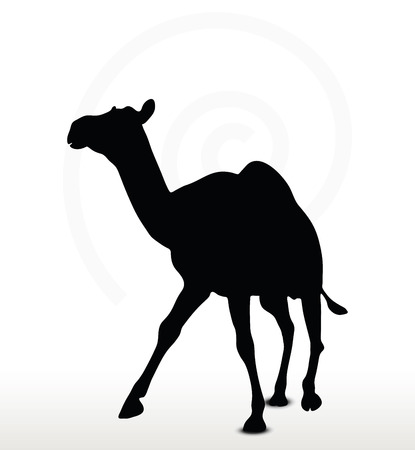 backlit: Vector Image - camel in Trotting pose  isolated on white background Illustration