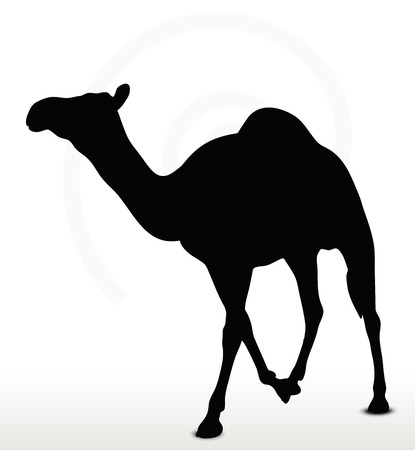 amimal: Vector Image - camel in Walking pose  isolated on white background