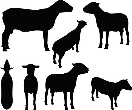 inactive: Vector Image - sheep silhouette with standing still pose isolated on white background