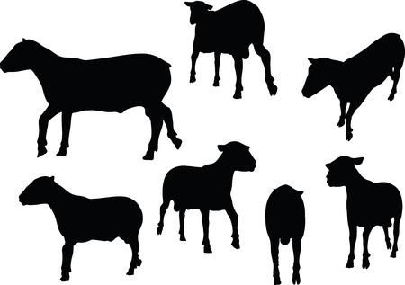 drafje: schapen silhouetten met draf pose op een witte achtergrond
