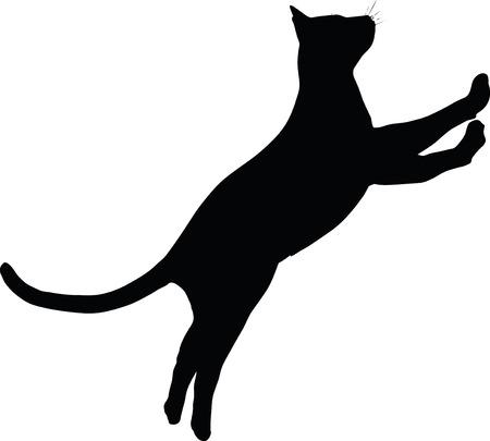 Imagen vectorial - gato silueta aislados sobre fondo blanco