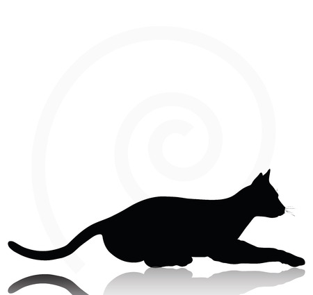shadow silhouette: Vector Image - cat silhouette isolated on white background Illustration
