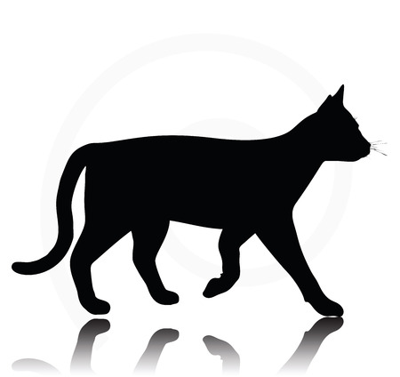 back lit: Vector Image - cat silhouette isolated on white background Illustration