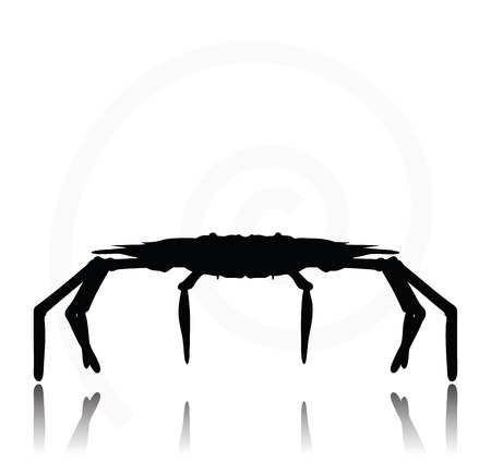 backlit: Vector Image - crab silhouette isolated on white background Illustration
