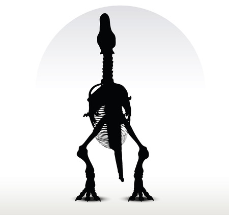 Vector Image - dinosaurs trex skeleton isolated on white background
