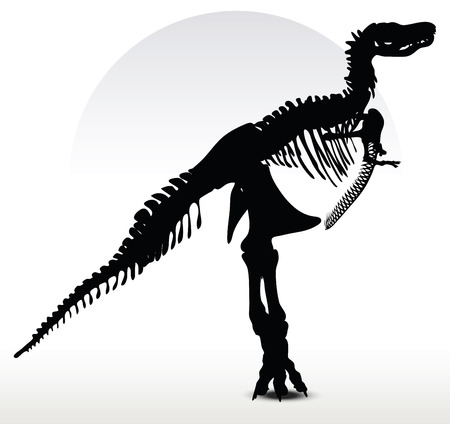 backlit: Vector Image - dinosaurs trex skeleton isolated on white background
