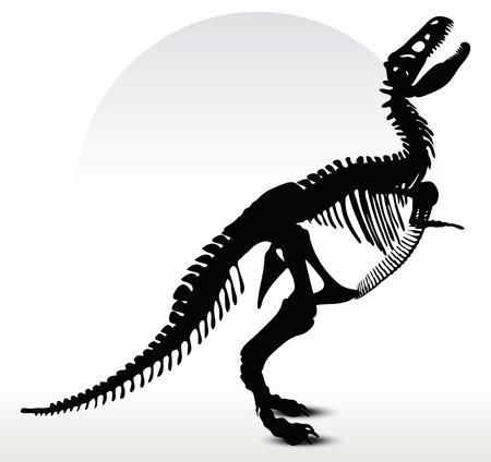dinosaurio: Vector de imagen - los dinosaurios trex esqueleto aislado en fondo blanco Vectores