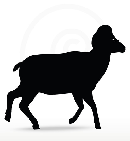 big horn sheep silhouette in walking pose isolated on white background