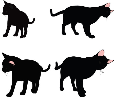 felid: Vector Image - cat silhouette in Rubbing Scent  pose isolated on white background