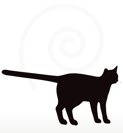 standing on white background: cat silhouette in standing pose isolated on white background Illustration