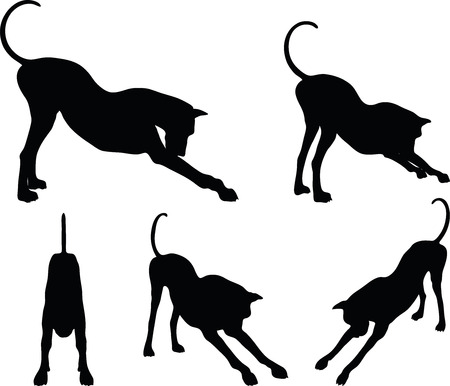 cur: Vector Image - dog silhouette in stretch pose isolated on white background
