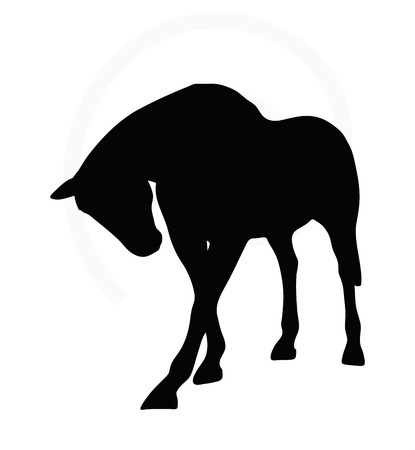 standing on white background: Vector Image - horse silhouette in standing around pose isolated on white background