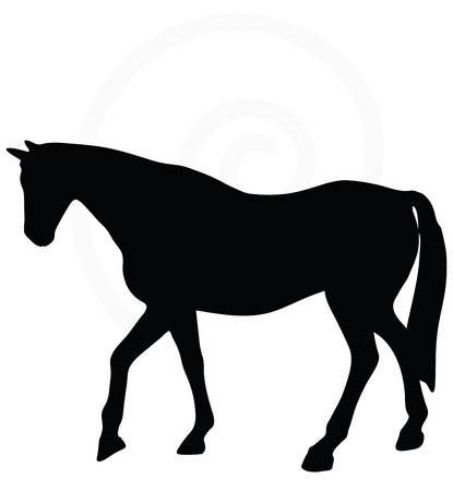 gee: Vector Image - horse silhouette in walking head up pose isolated on white background
