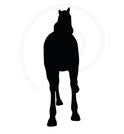 horse show: Vector Image - horse silhouette in show horse pose isolated on white background Illustration