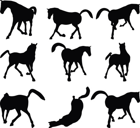 gee gee: Vector Image - horse silhouette in looking good pose isolated on white background