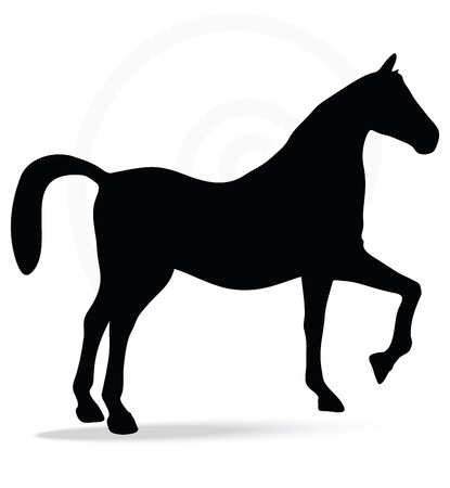 steed: Vector Image - horse silhouette in show horse pose isolated on white background Illustration