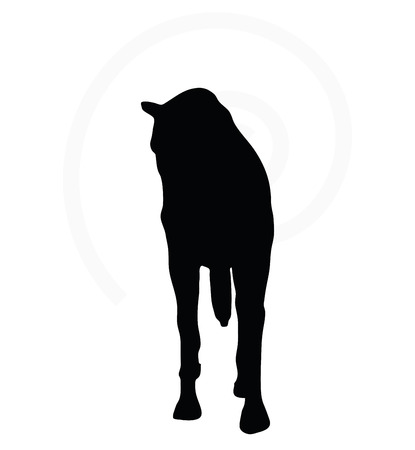 gee gee: Vector Image - horse silhouette in walking head down pose isolated on white background Illustration