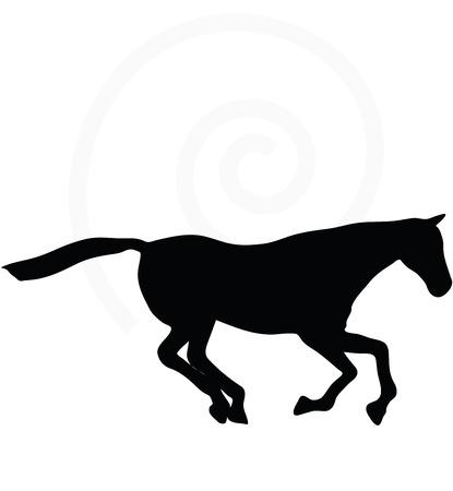 galop: Vectoriel - silhouette de cheval de galop pose isol� sur fond blanc