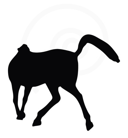 good looking: Vector Image - horse silhouette in looking good pose isolated on white background