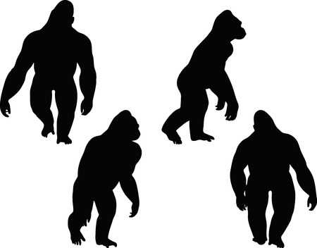 backlit: Vector Image - gorilla silhouette, isolated on white background