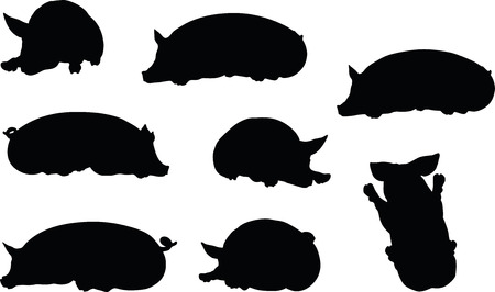 Vector Image, pig silhouette, in Lay pose, isolated on white background