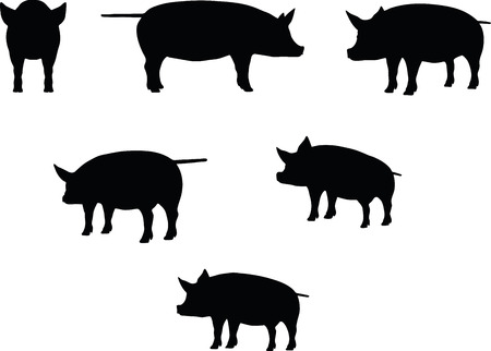 grunter: Vector Image, pig silhouette, in a standing position, isolated on white background