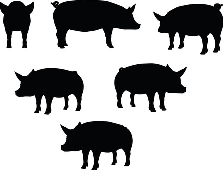 カール尾ポーズで、白い背景で隔離の豚シルエット ベクトル画像