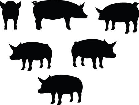 cochinitos: Imagen vectorial, silueta cerdo, en Curl Tail pose, aislado en fondo blanco