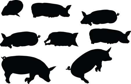 Vector Image, pig silhouette, in Lay flat pose, isolated on white background Illustration