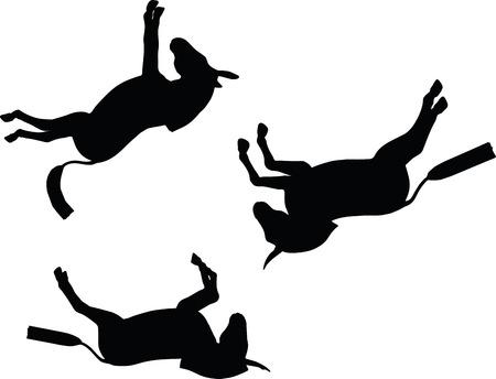 burro: Imagen vectorial, silueta del burro, al caer pose, aislado en fondo blanco Vectores