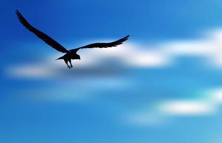 adler silhouette: EPS 10 vector illustration of eagle silhouette