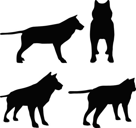 brute: vector illustration of animal wolf silhouette Illustration